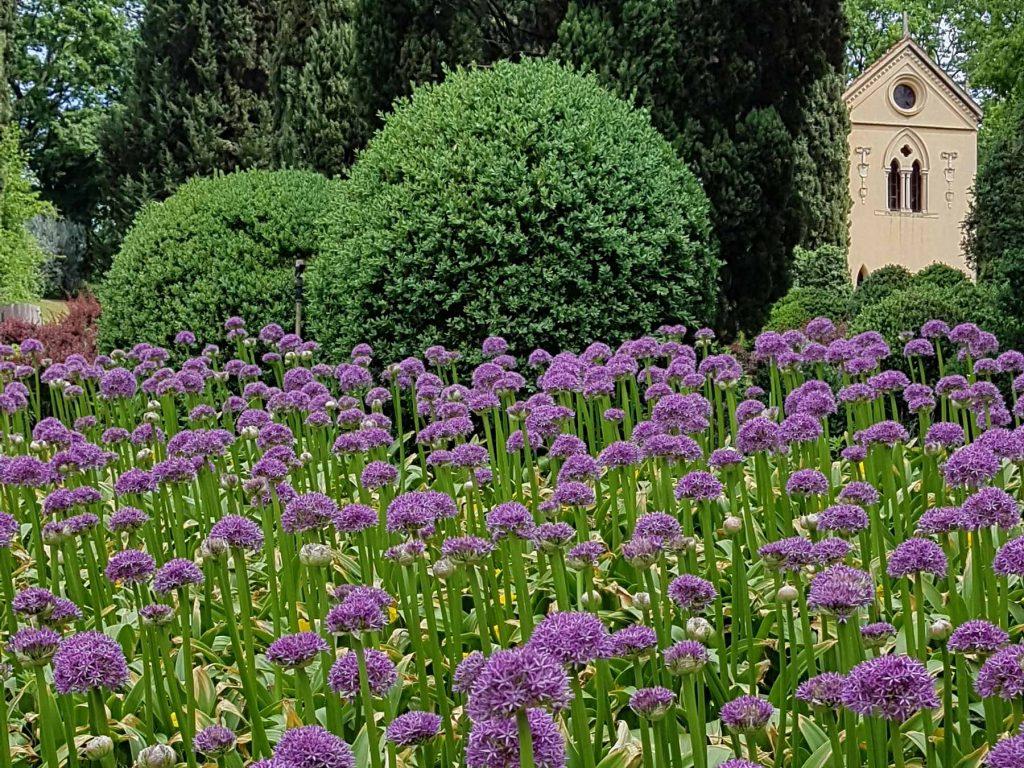 Fiori del Parco Giardino Sigurtà